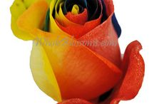 Rainbow Flowers / by WholeBlossoms Wholesale Wedding Flowers