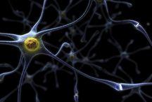 Brain Science / by Holly Hastings