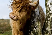 ...farm beast... / by Lindsay Roberts