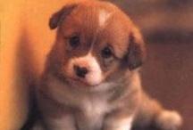Puppies! / by Nina Bratcher