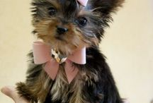 Pets / by Kim Germinaro
