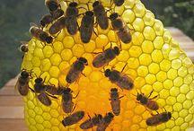 Bee Art / by Really Raw Honey