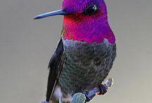 birds of a feather / by Wendi Schutt