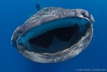 What I've seen when diving :)  / by Amy Morris