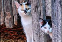 Barn Cats / by FarmStayUS
