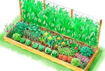 Kitchen Garden Ideas... / by Loralea Kirby