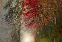 Autumn / by Rachel Suntop
