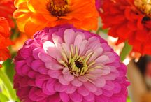 found in nature: flora and fauna / by Betsy Hoffman
