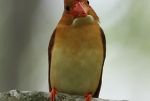 Kingfishers I'd like to meet / by Aki Kanamori