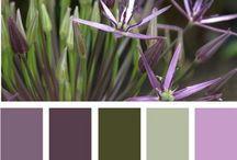 Room Colors / by Cassandra Ericksen
