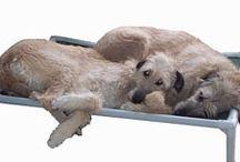 Irish Wolfhound  / Irish Wolfhounds enjoying their Kuranda beds! / by Kuranda Dog Beds