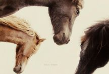 Gli Animali. / by Elsabe Milandri