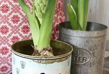 The greenest thumb / by Beth Rodio