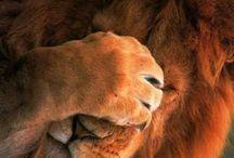 Amazing ✈ Animals / by Nounours