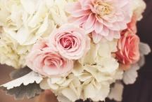 Wedding / by Mary Hanson