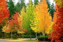 秋 Autumn and Fall~ the year's last, loveliest smile. / When Fall has arrived~Behold the changing leaves, and enjoy the crisp breeze. Let your eyes take in the bursts of color. Transformation is afoot and hope is in the air.   / by ✿⊱╮Janice Caldwell