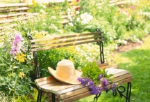 Yard and Garden / by Rose Novack