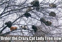 Crazy Cat Lady kit / by Maria Ralphs Macrae