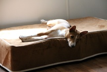 Basenji / Basenjis on Kuranda beds / by Kuranda Dog Beds