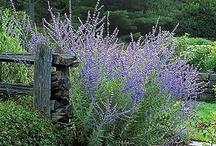 Garden Xeriscape / by Judy Hart
