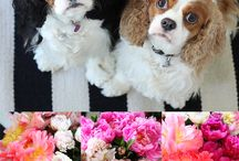 Pets / by Heather Yamashiro {Lily's E'Claires}