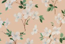peaches / by Charlotte Raffo
