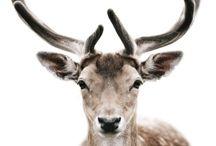 Oh Deer! / by Sam Olivier