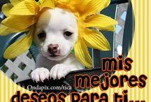 Saludos / Saludos para toda ocasión con lindas imágenes / by OndaPix.com