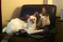 Kitty Cats, Kitty Cats..   I love them all! / by Tammy Reynolds-Rice