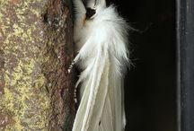 Animal Lover (butter/dragon-flies & moths) / by amystrawn