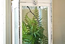 Indoor/Outdoor Mini Gardening / by Angie Kirby