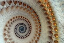 Wonderful shells / by Lynne Speaker