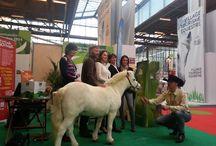 Tour du monde en 80 chevaux / French Caen Caen  / by Alltech FEI World Equestrian Games™ 2014 in Normandy.