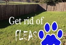 flea remedies / by Lori arner