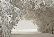 Snow / by Tina Marsh