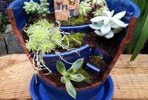 mini plants / by Nicole Craffey