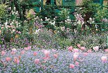 Monet's Gardens/ Paintings / by Jeannette Walker-Brown