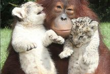 Animals that I love / by sheontay brown