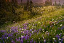 Washington / by Kristin Walton