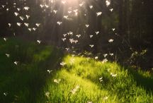 Dreams / Cause you got to have something to look forward to .... / by Angela Franklin