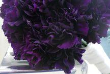 All things purple! / by Erica Floyd