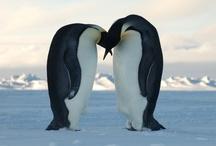 Penguins / by Carol Di