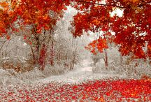 Shades of the Season: Autumn / by Chastity Holmquist