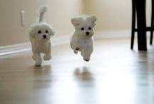 Puppies / by Haleigh Gutheil