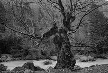 Carbon Photographs / Carbon Photographs / by Michelle Stamler