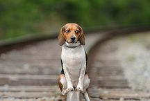 Beagles are Best! / Beagles are the most jowelly and loving dog breads. not to mention Snoopy is a Beagle so...  BEAGLE'S ARE BEST  / by Felipe Lobon