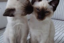 Cats >^.^< Fur Kids / Cats / by Debbie Beals