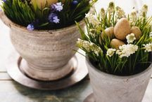 spring has sprung  / by Creative Carmella