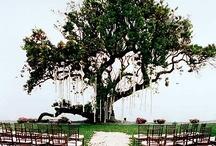 EverAfter. / Wedding / by Averi Jenkins