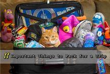 Dallas Trip / Vacation / by Morgan Burkhart